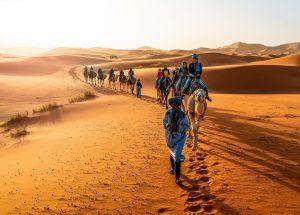 Balade à dos de chameau dans les dunes de Merzouga